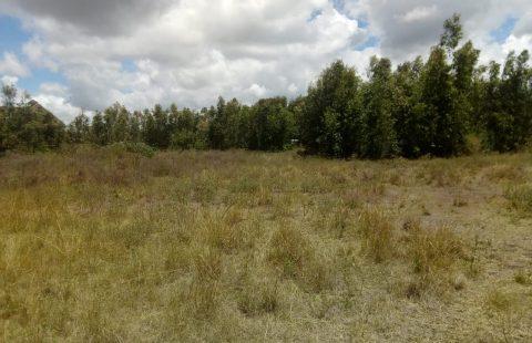 Land for sale in karen
