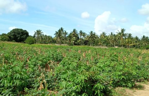 10 Acres for sale in Mtwapa